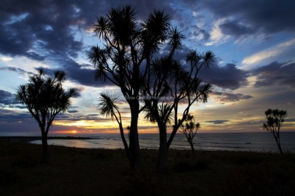 Cabbage Tree Haven - Photography by Elyse Childs