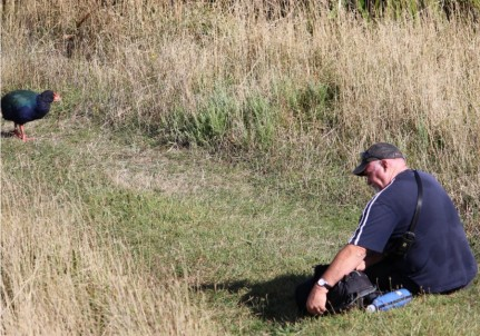 Chris gets close up to the Takahe - Photography Chris Hogan