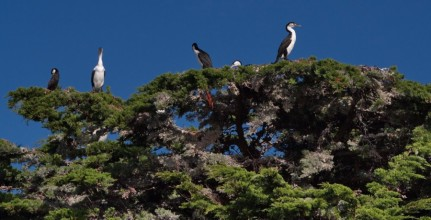 Shag Tree - Photography Steve Courtenay