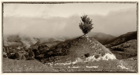 Title: One Tree Hill, State Highway 4, 3rd, by Margaret Hobbs, Judge's Comments: Well proportioned composition. The tree stands out against the low cloud or mist in the background. A simple plain frame would be best I feel.