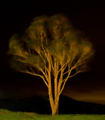 Title: Whitby Tree, Pic of the week, by Gary Jones, Judge's Comments: The slow exposure has created an interesting image with the movement of the branches. I like the way it is highlighted by the light and the small amount of glow in the background gives depth of field and interest. I grew to like this image the more I viewed it