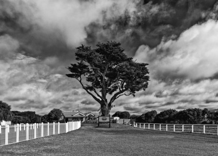 Title: Queenscliff station, 4th, by Keith Harrison, Judge's Comments: The fences lead us into the centralised tree with the sign in front. The clouds behind have interesting texture and are a strong subject in the background. Good contrast and composition.