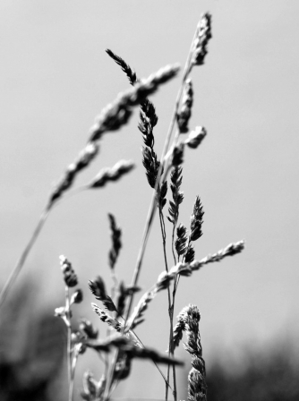 <p>Grass - Photography Denise Gandy</p>
