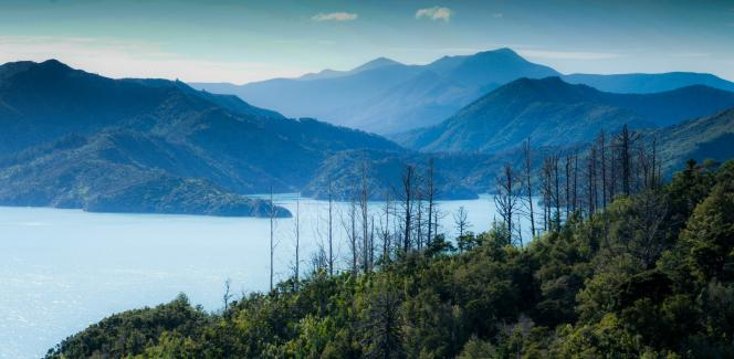 Photographic opportunities abound on the coastal drive from Picton - Photography by Ray Lovell